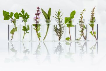 51662823 - bottle of essential oil with herb holy basil leaf, rosemary,oregano, sage,basil and mint on white background.